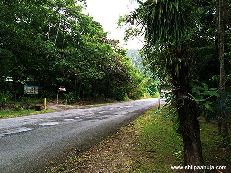 cairns_to_daintree_rainforest_road_drive_queensland_australia_tourism_trip_travel_planning_things_to_do_activities_how_to