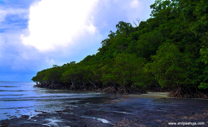 cape_tribulation_beach_blue_white_sand_trees_exposed_roots_cairns_queensland_australia_tourism_trip_travel_planning_things_to_do_activities_beautiful