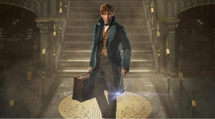 fantastic-beasts-and-where-to-find-them-newt-scamander