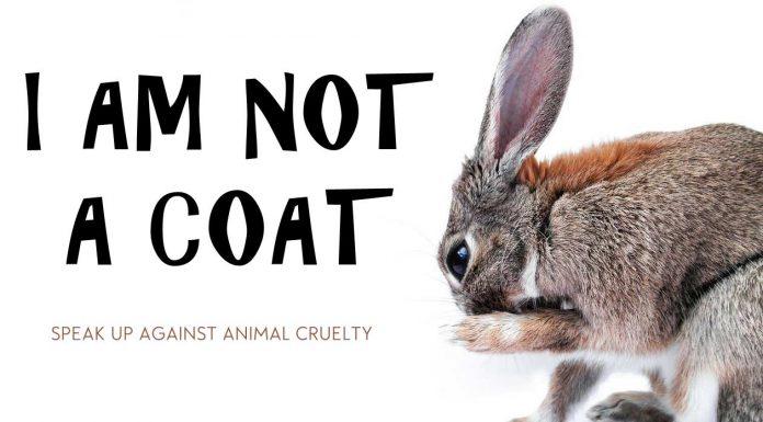 animal-cruelty-rabbit-fur-abuse-cruel-killed-against