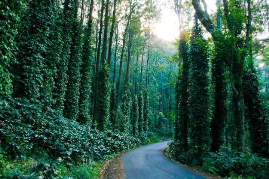 best-one-day-trip-around-chennai-yelagiri-hill-station-trip- advisor-greenary-India