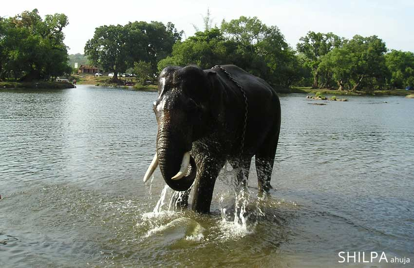 south-india-tour-plan-guide-itenary-coorg-dubbare-elephant-camp