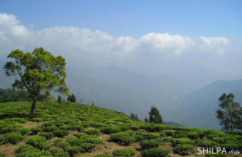 south-india-vaction-plan-holiday-destinations-best-hill-stations-coorg-karnataka