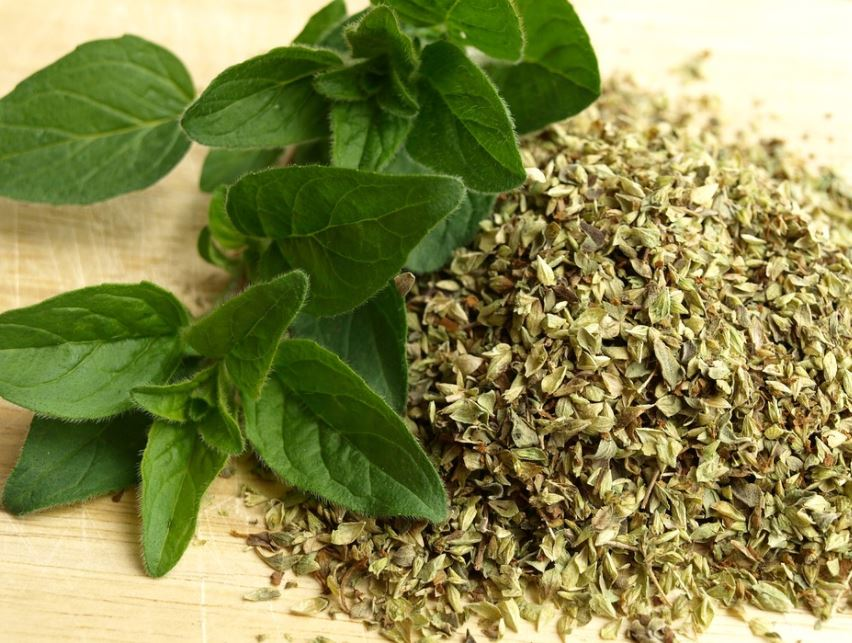 oregano-best-essential-oils-to-use-muscle-pain
