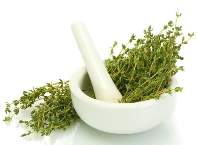 thyme-essential-oils-for-muscle-pain