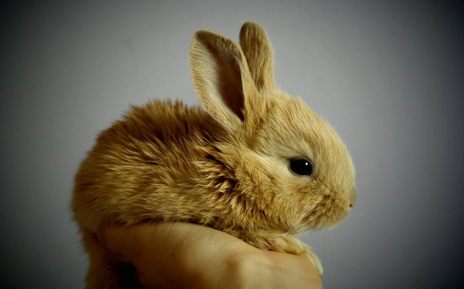 animal-cruelty-abuse-torture-rabbit-fur-peta-india