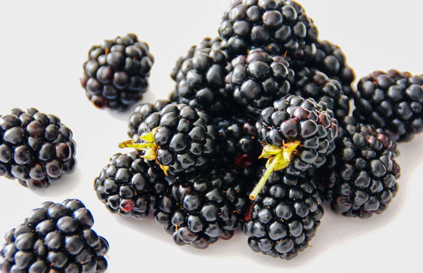 list of berries blackberry-health-benefits-list-of-berries-health-benefits