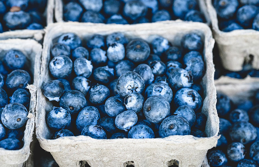 blueberry-list-of-edible-berries-health-benefits