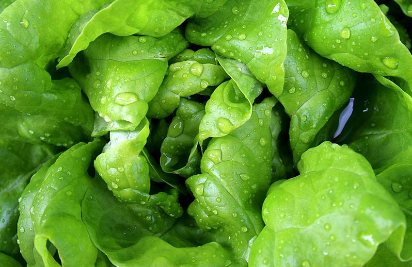 freezing-fresh-spinach-storing-usage-frozen-freezer-ideas