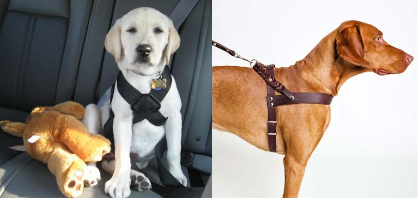 dogs-grroming-belts-different-types-of-belts-for-dogs-ideas-how-to