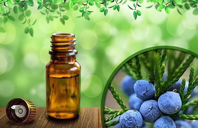 juniper-berry - essential-oil-treatment-natural-therapy-skincare-skin