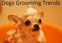 dogs-grooming-trends-designs-hairstyles-personal-hygiene-how-to-ideas