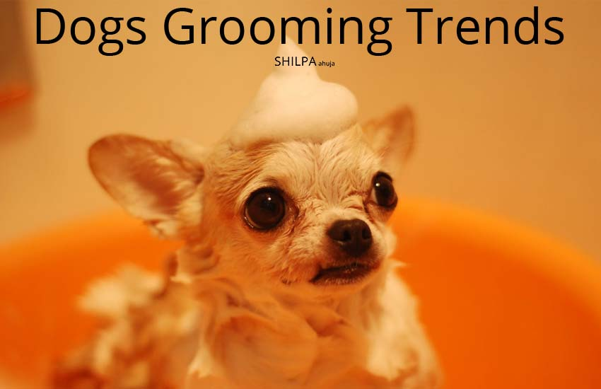 Grooming Dogs-trends-designs-hairstyles-personal-hygiene-how-to-ideas