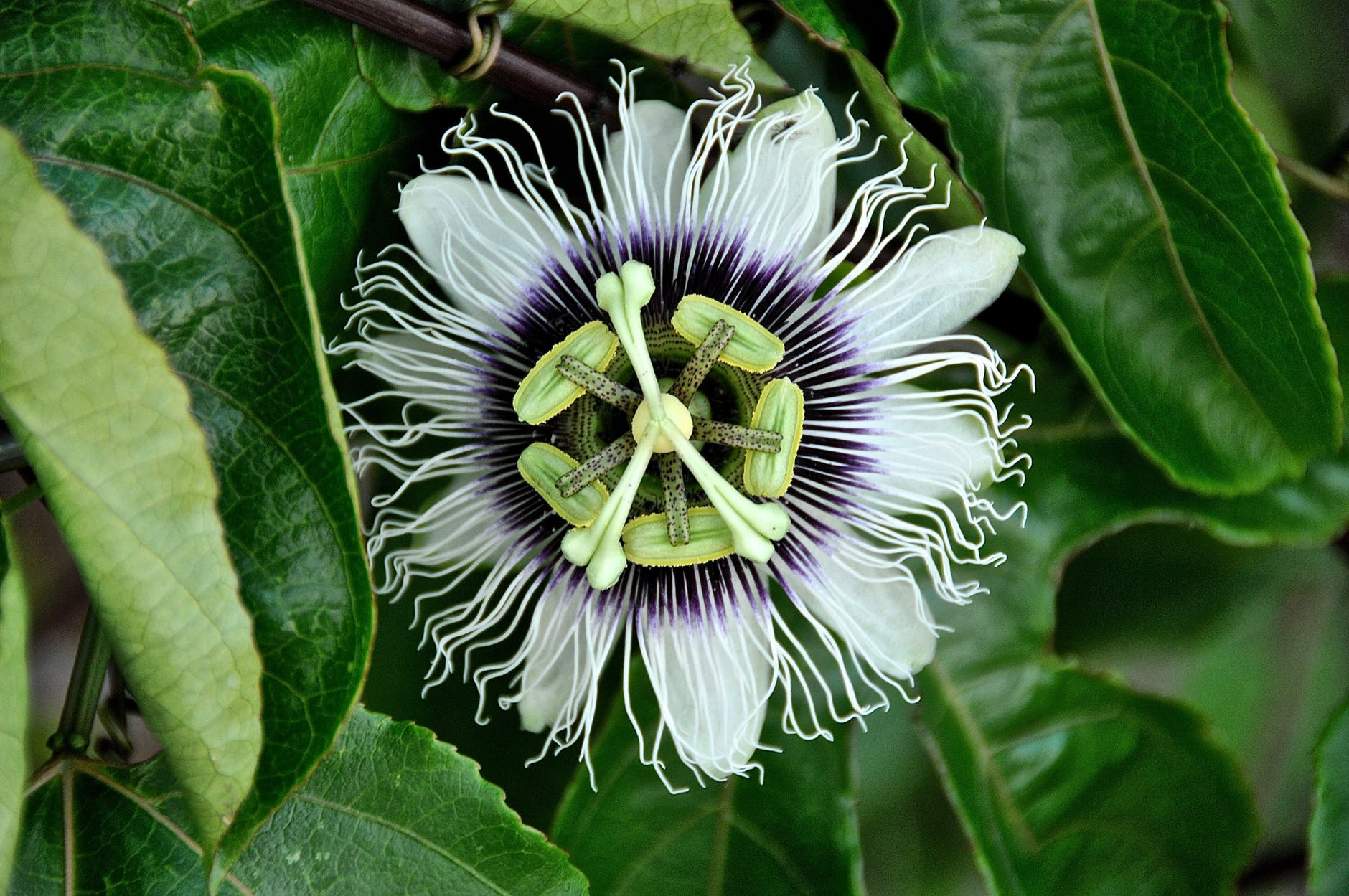 top-beautiful-flowers-around-the-world-colorful-buds-colors-ideas-blossom-passion flowers