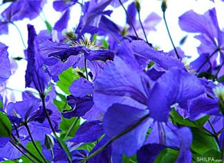 beautiful-flowers-beauty-types-of-flowers-all-around-the-world-fragrances-ideas
