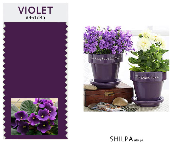 winter-colors-violet-eggplant-for-interior-desk-decoration