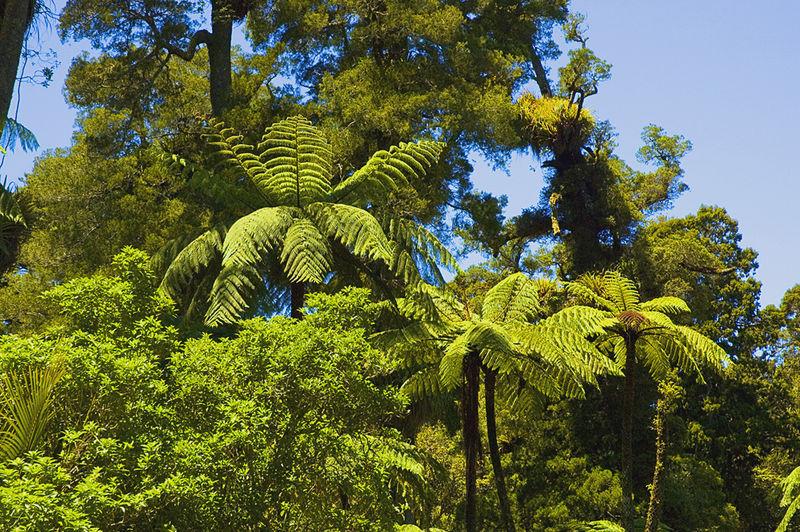 Auckland region new zealand capital WaitakereRanges_travel guides