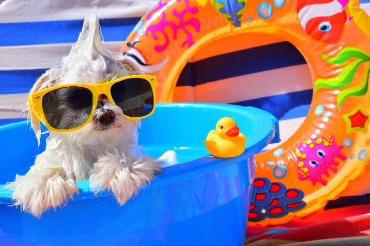 Polarized Sunglasses fastrack trends eyewear
